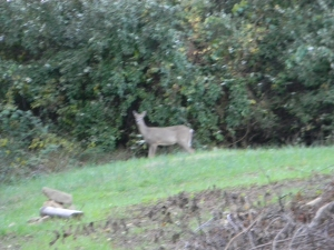 """Oh dear, who's moving into the neighborhood,"" said the deer."