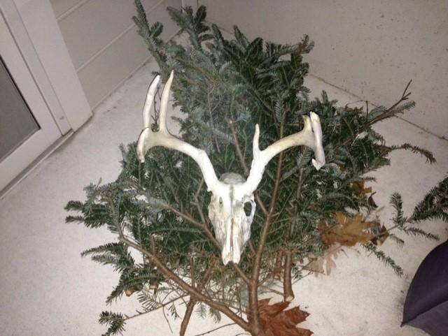 deer-antlers-3
