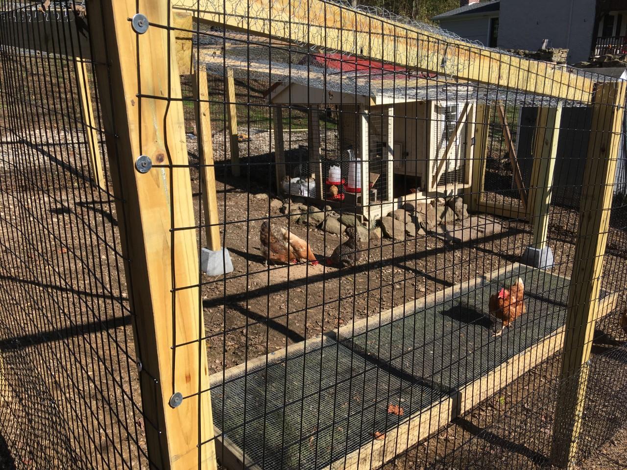 Chicken Coop with Chicken Grass Box