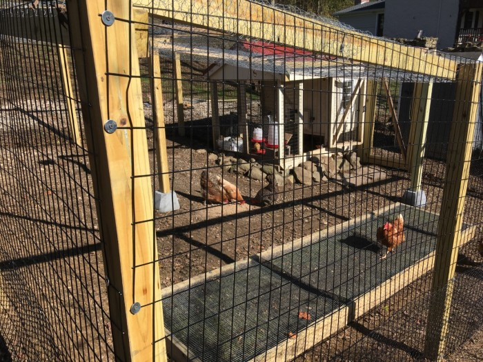 Chicken Coop with Chicken Grass Box